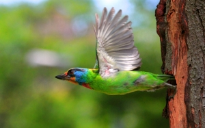 birds_flying_colorful_female_tree_56559_1920x1200